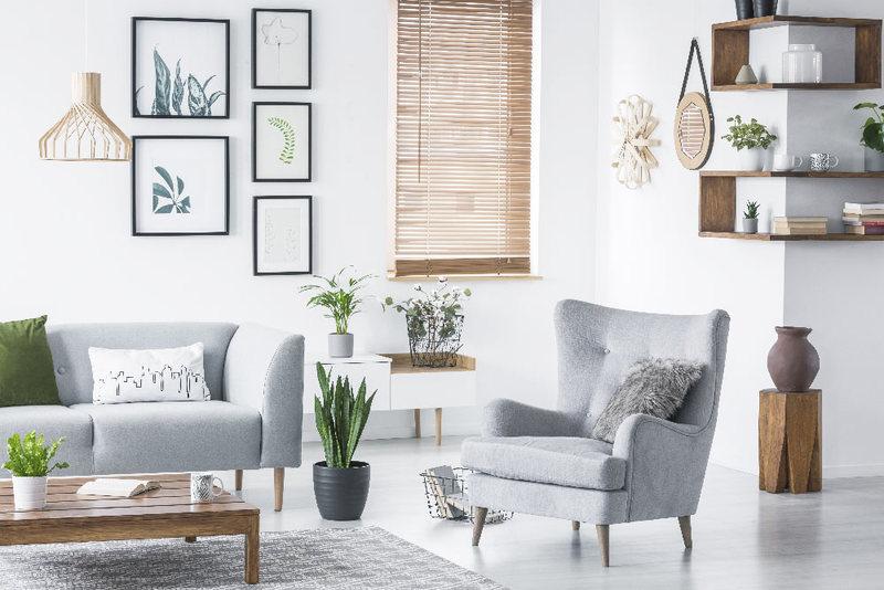 Arreda la tua casa con le piante