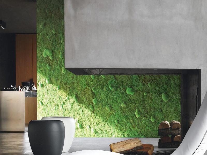 Piante da interno per parete