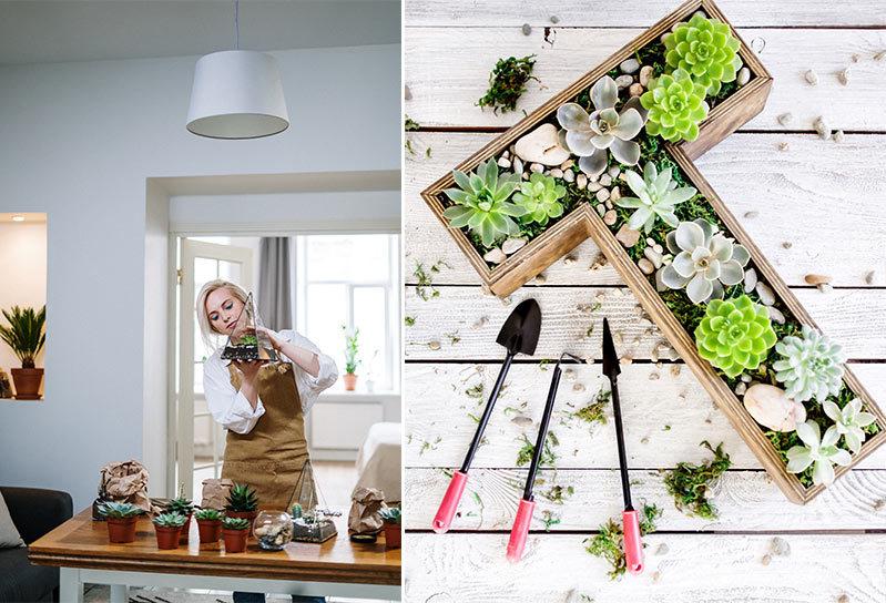 Giardini verticali per interni, vantaggi per la tua casa sostenibile